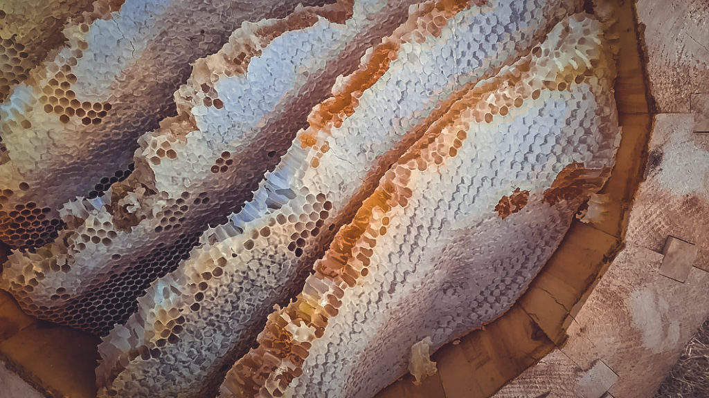 Колодный мёд, дикий мёд, бортевой мёд